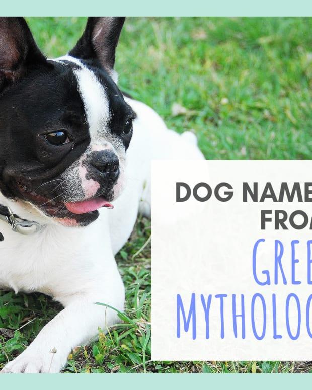 15-names-for-your-dog-based-on-greek-mythology