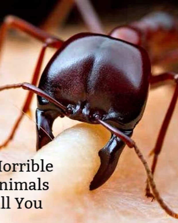 which-horrible-animal-death-would-you-rather-suffer