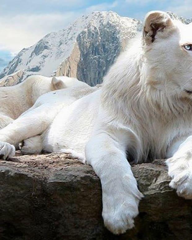 stunning-albino-animals