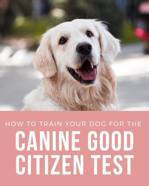 how-to-prepare-for-the-canine-good-citizen-test