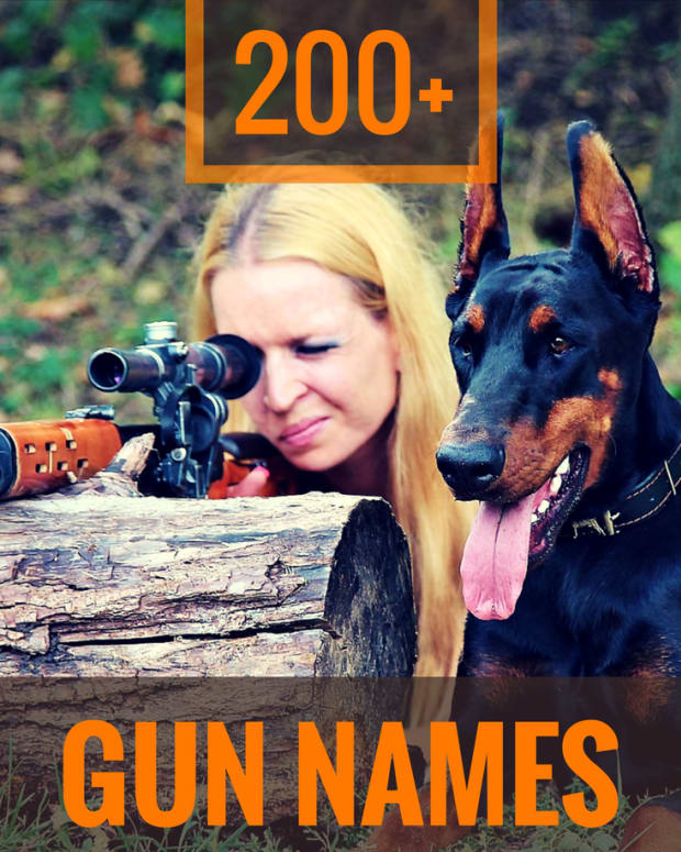 gun-names-for-dogs