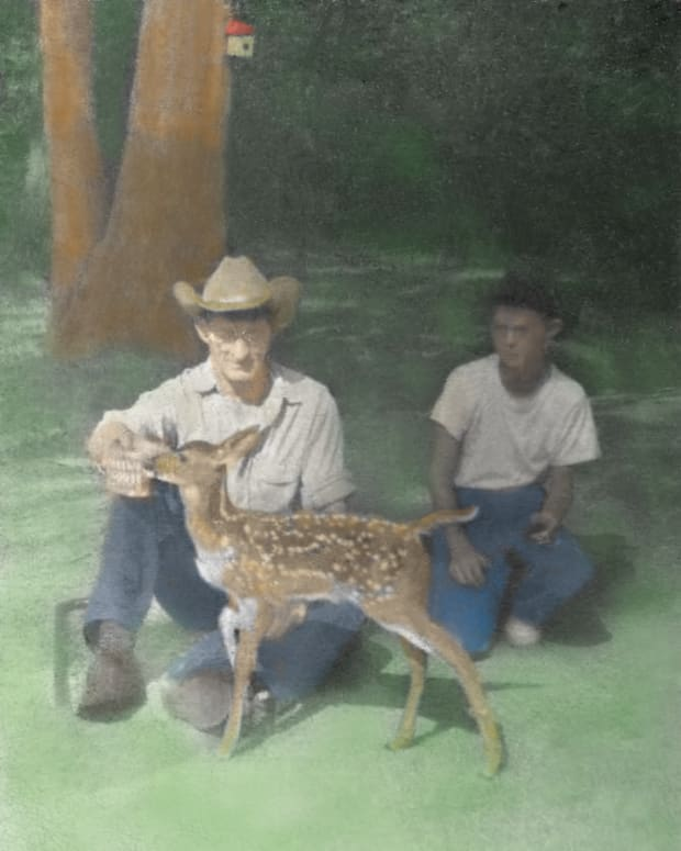 our-pet-deer