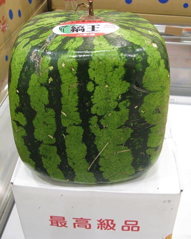 the-bonsai-kitten-hoax