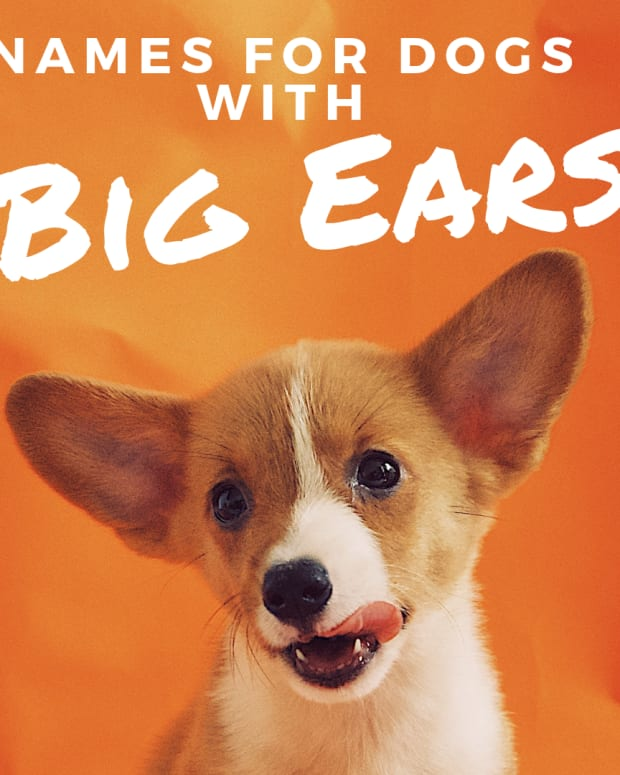 33-names-for-dogs-with-big-ears