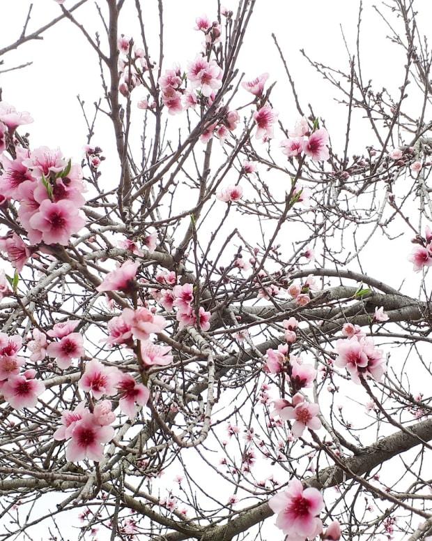 springtimeinindiana
