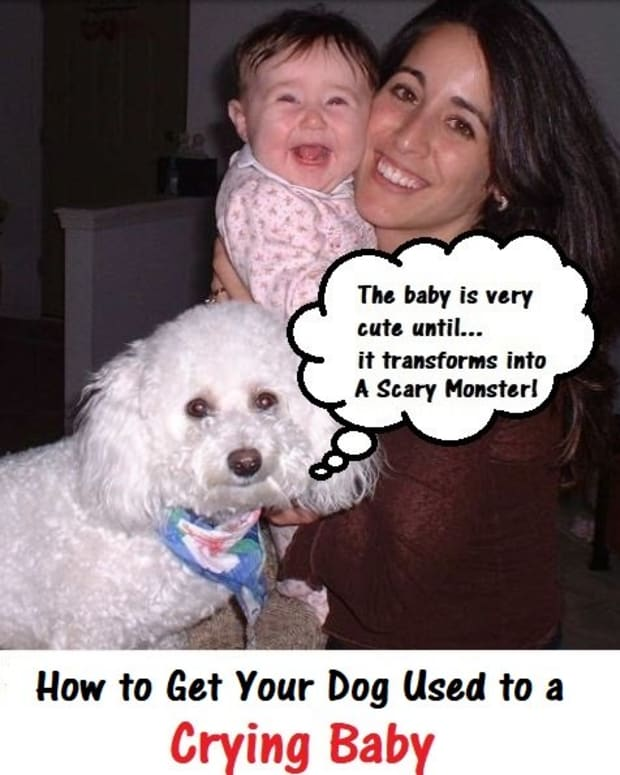 how-to-get-a-dog-used-to-a-crying-baby
