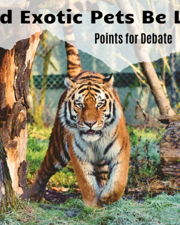 debate-topic-exotic-pets-should-be-legal