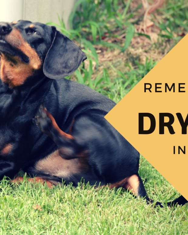 remedy-for-dog-with-dry-skin