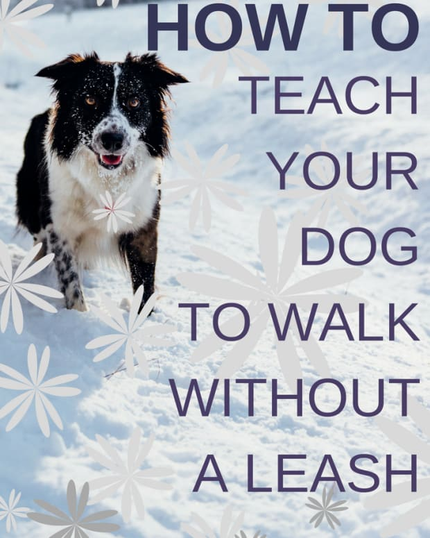 howtowalkdogwithoutleash