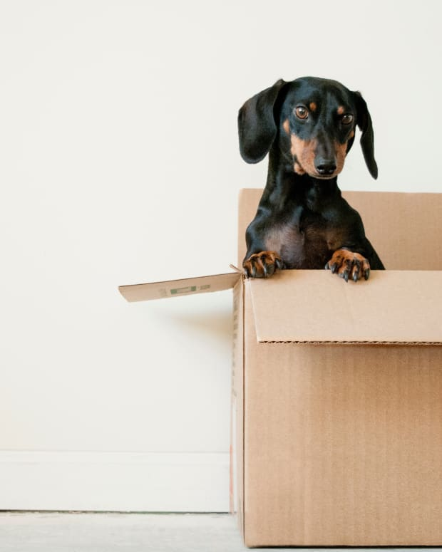 pet-food-delivery-chewycom-review