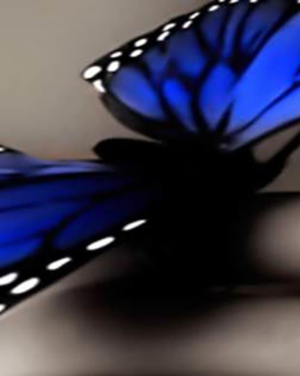 butterfly-on-my-fingertip