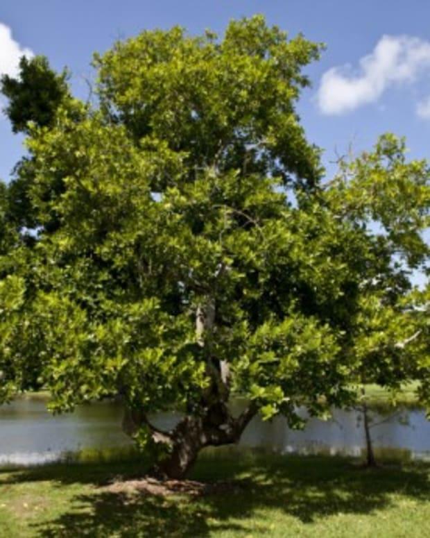 how-christians-should-be-like-trees
