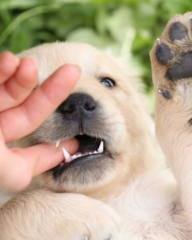 how-to-get-a-puppy-dog-to-stop-biting