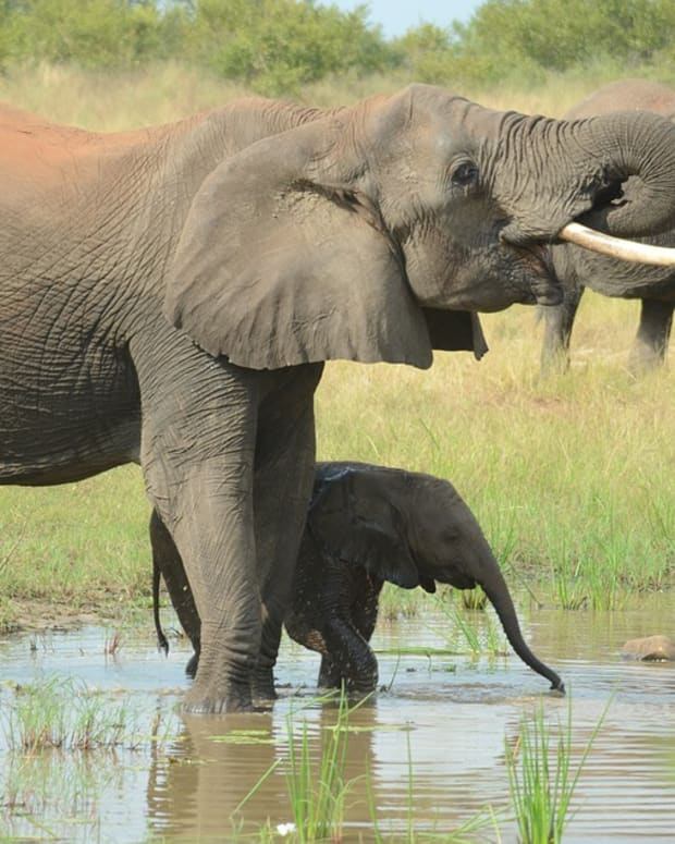 lawrence-anthony-the-elephant-whisperer