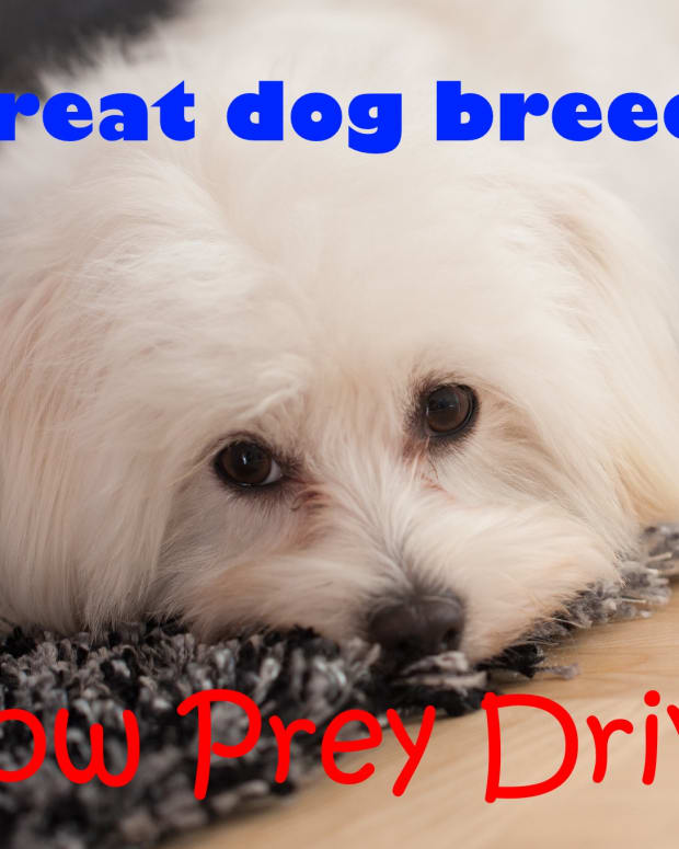 dogs-with-no-prey-drive