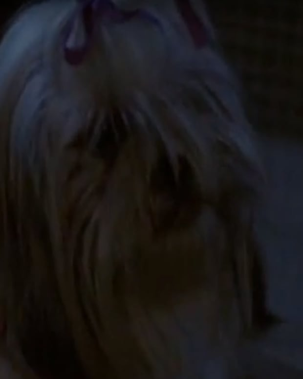horror-movie-pets-that-are-just-the-best