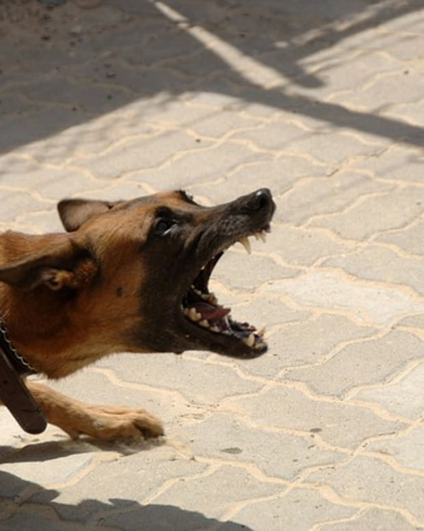 how-to-stop-dog-aggression-with-training