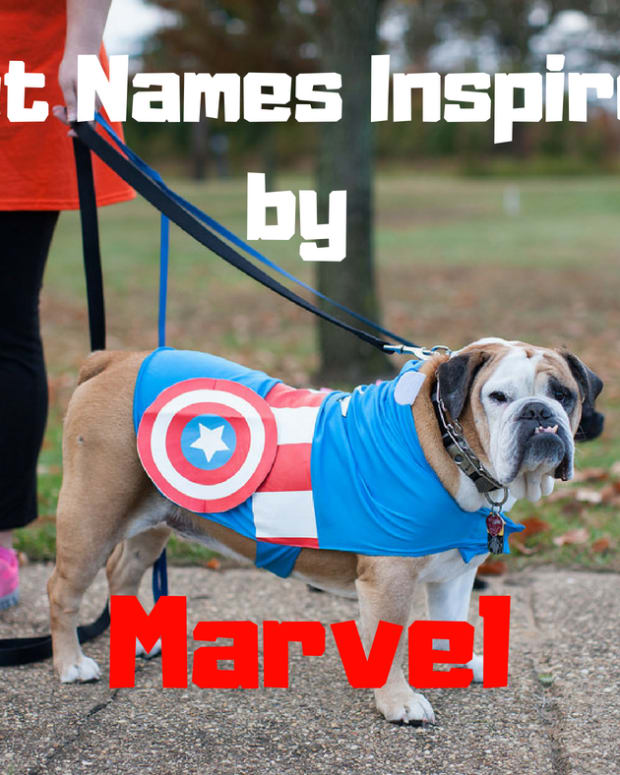 marvel-pet-names
