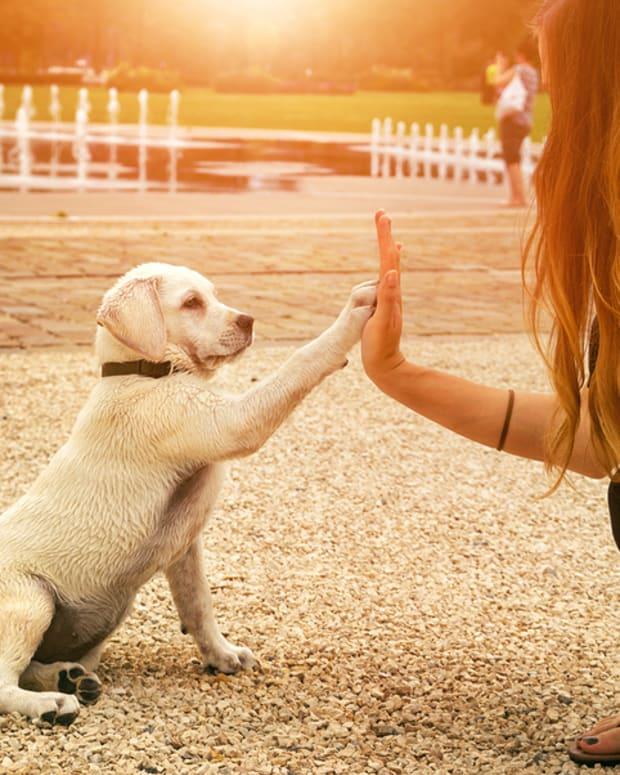 love-my-dog
