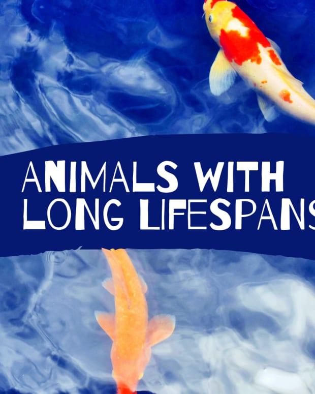 pets-longest-life-span