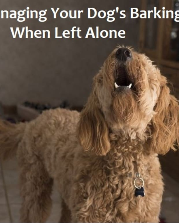 how-to-deal-with-dog-barking-when-left-alone