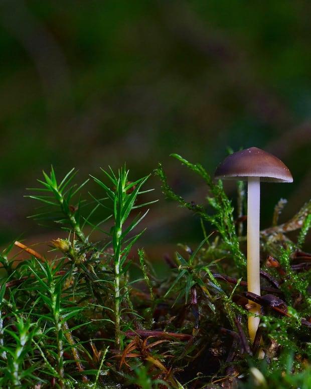 mushrooms-are-both-food-and-medicine