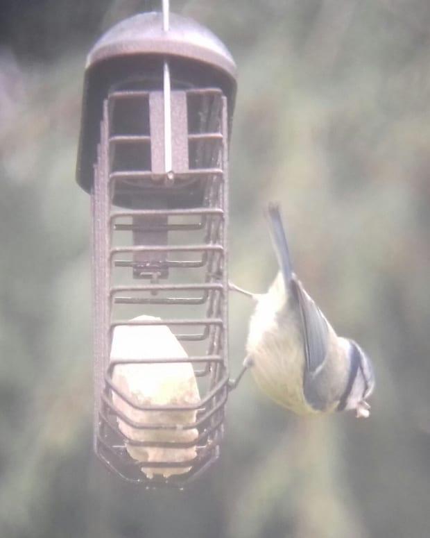 birding-the-complete-guide-to-garden-birding