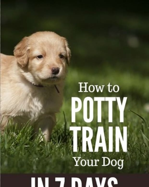 how-to-potty-train-a-dog-in-7-days