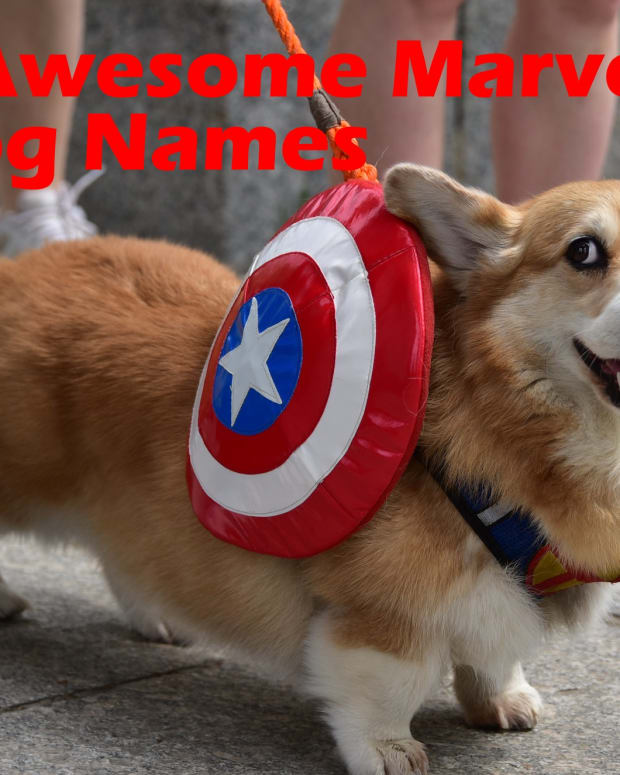 marvel-dog-names