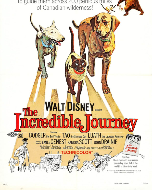 film-review-the-incredible-journey