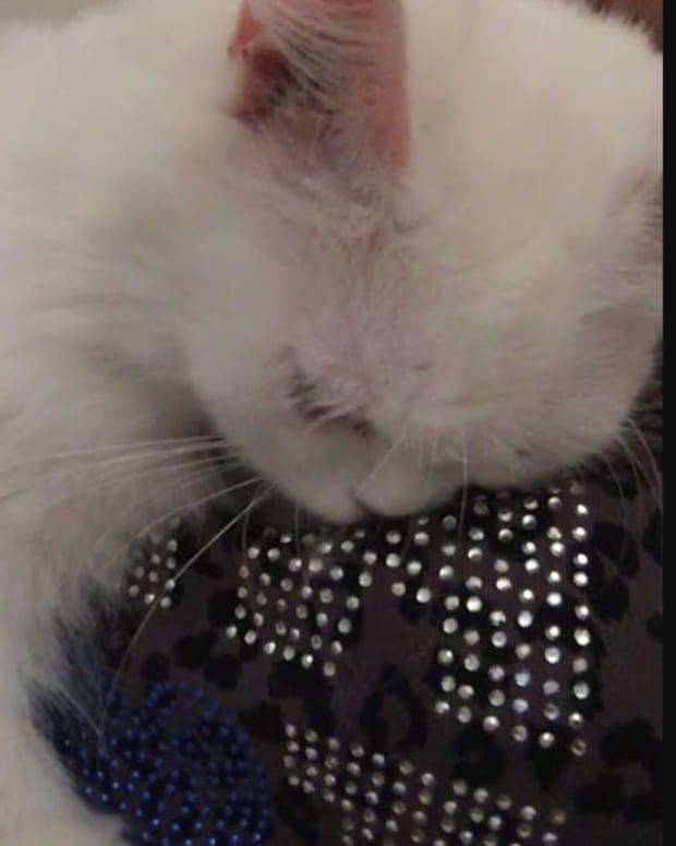 losing-my-cat