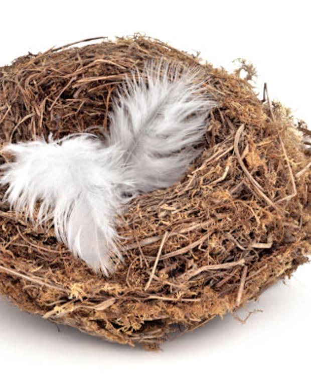 empty-nest-not-empty-life