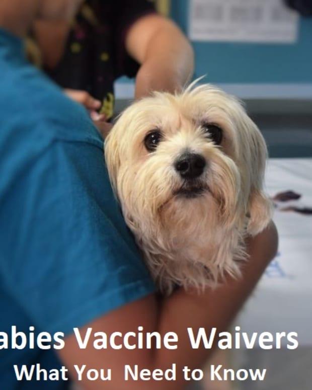 dog-rabies-vaccine-waiver-not-going-to-happen
