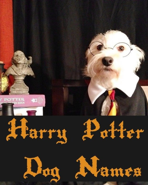 harry-potter-dog-names