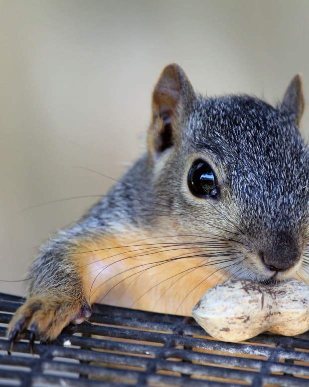 types-of-squirrels-people-keep-as-pets