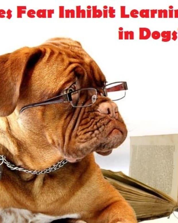 does-fear-inhibit-learning-in-dogs