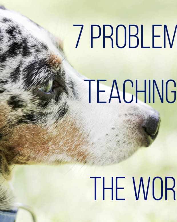 problems-with-teaching-a-dog-no