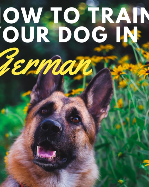 a-guide-to-training-a-dog-german-commands