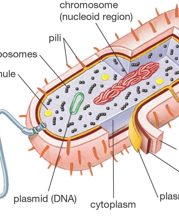 biolog-101-cells