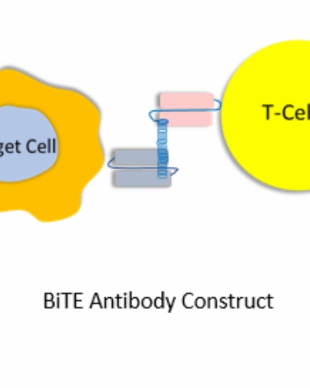 bispecific-antibodies