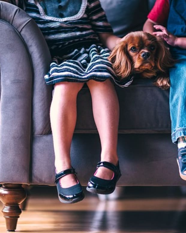 how-much-should-you-pay-dog-house-sitters