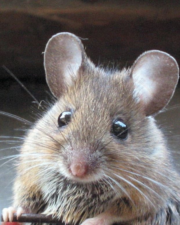 my-adventures-getting-rid-of-mice