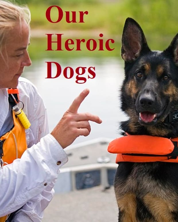 dogs-that-save-lives-facts-about-search-and-rescue-dogs