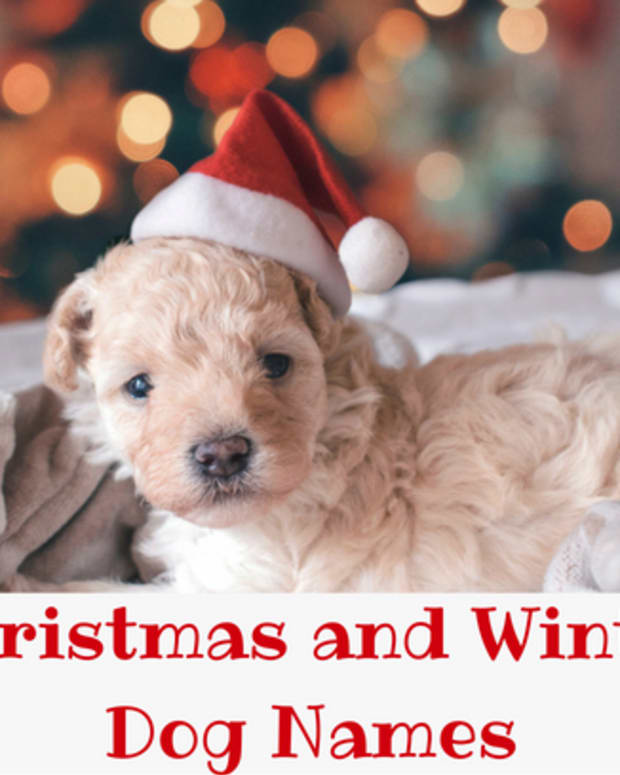 winter-and-christmas-dog-names