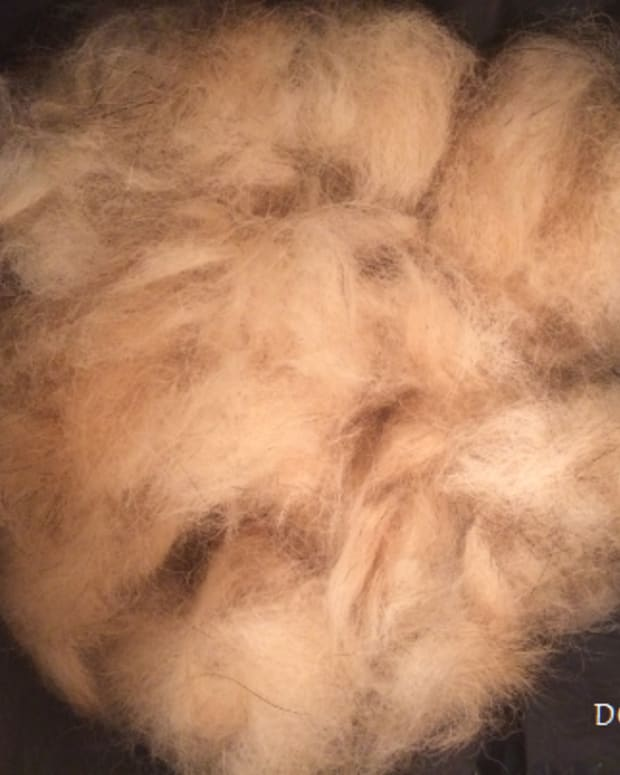 an-ode-to-pet-hair