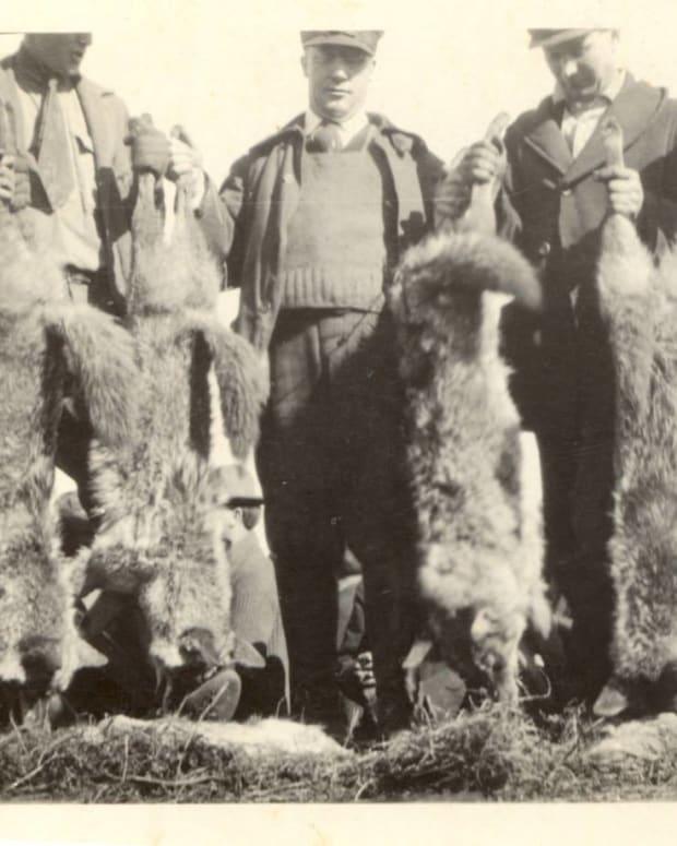 kansas-wolf-hunts