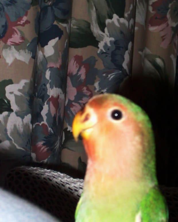 a-bird-that-tweets
