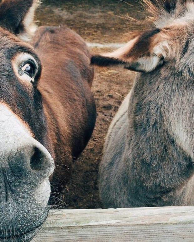 spider-donkey-kids-poem