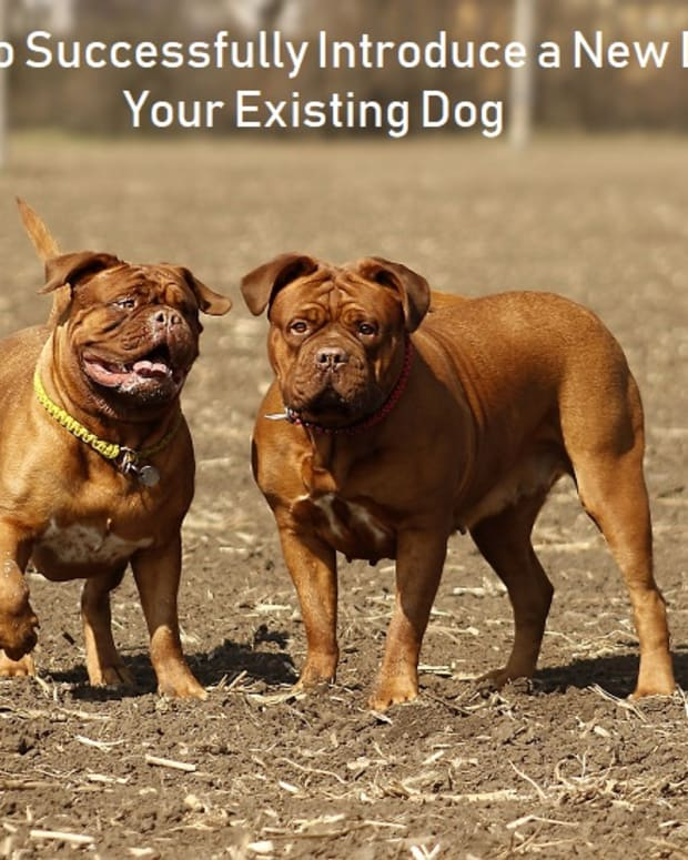 introducing-a-new-dog-to-your-existing-dog-dont-miss-these-steps