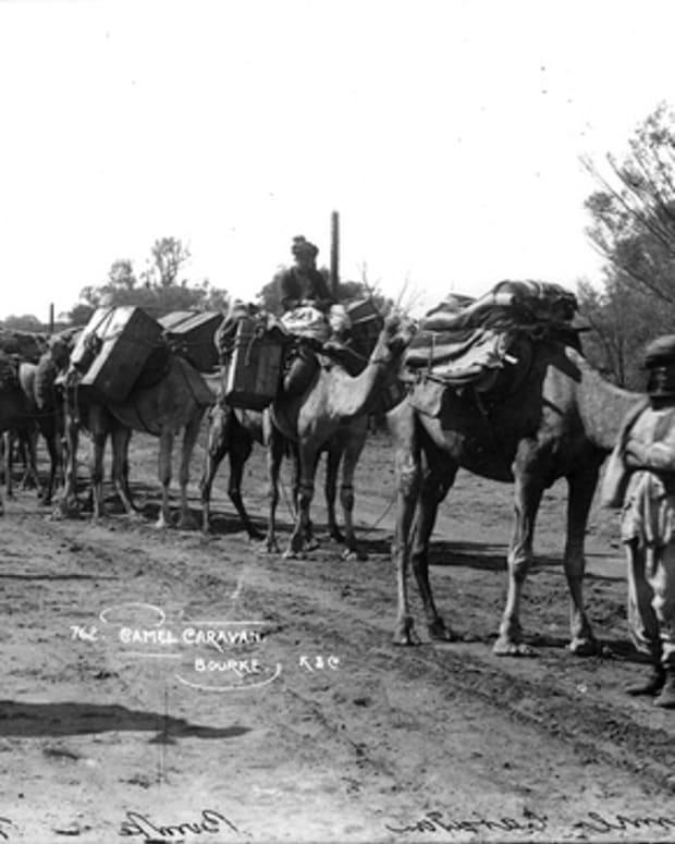 australias-feral-camels